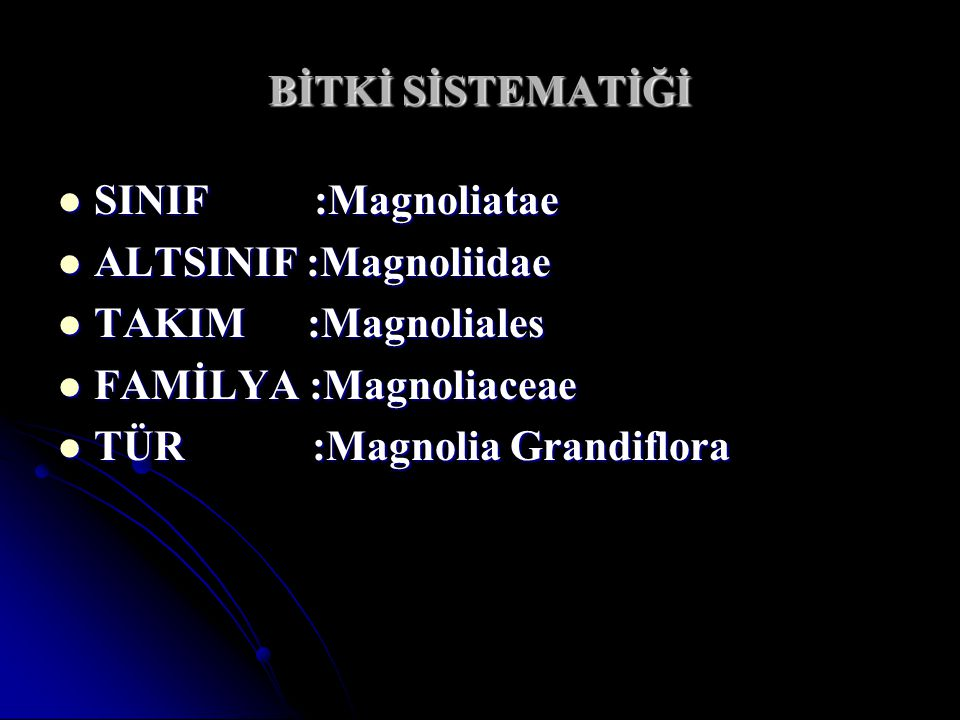 BİTKİ SİSTEMATİĞİ SINIF :Magnoliatae. ALTSINIF :Magnoliidae. TAKIM :Magnoliales. FAMİLYA :Magnoliaceae.