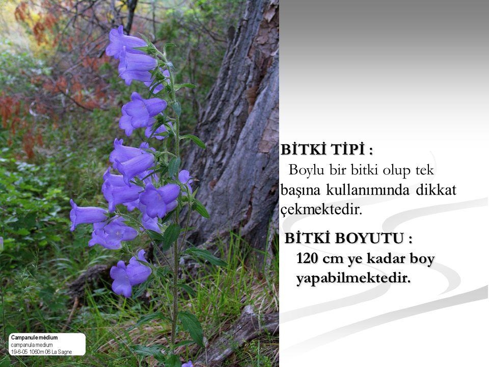 BİTKİ TİPİ : Boylu bir bitki olup tek. başına kullanımında dikkat. çekmektedir. BİTKİ BOYUTU : 120 cm ye kadar boy.