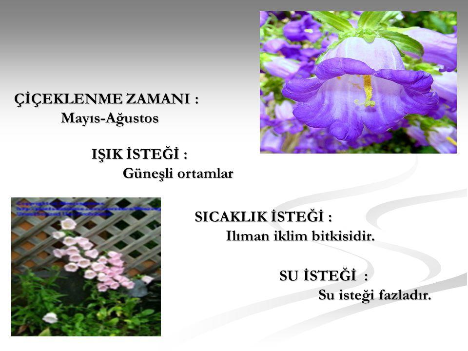 ÇİÇEKLENME ZAMANI : Mayıs-Ağustos. IŞIK İSTEĞİ : Güneşli ortamlar. SICAKLIK İSTEĞİ : Ilıman iklim bitkisidir.