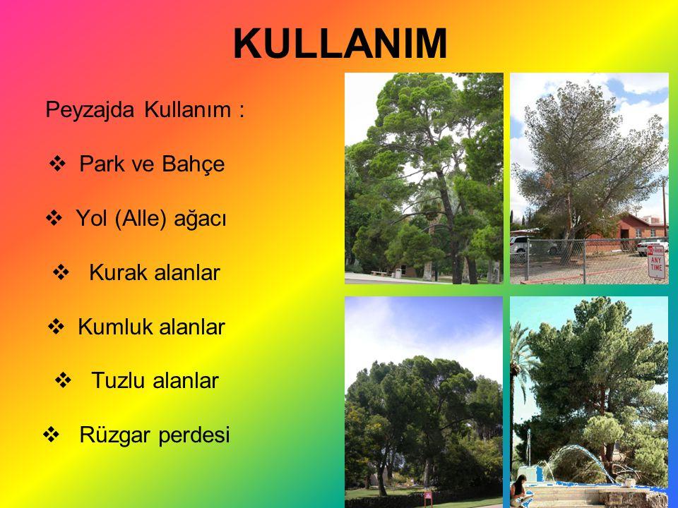 KULLANIM Park ve Bahçe Yol (Alle) ağacı Kurak alanlar Kumluk alanlar