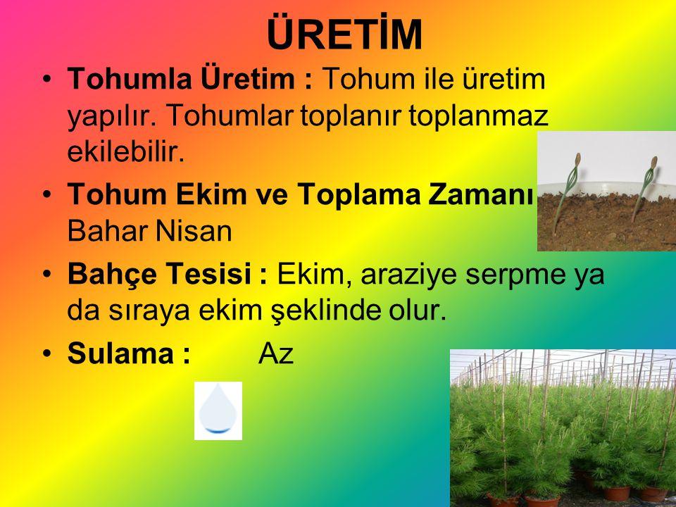 ÜRETİM Tohumla Üretim : Tohum ile üretim yapılır. Tohumlar toplanır toplanmaz ekilebilir. Tohum Ekim ve Toplama Zamanı : Bahar Nisan.