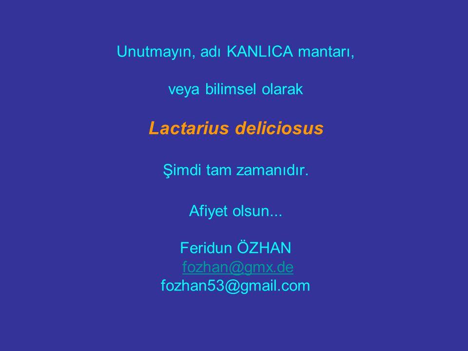 Unutmayın, adı KANLICA mantarı, veya bilimsel olarak Lactarius deliciosus Şimdi tam zamanıdır.