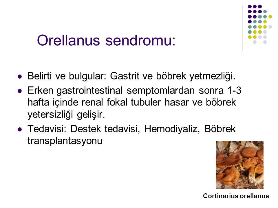 Orellanus sendromu: Belirti ve bulgular: Gastrit ve böbrek yetmezliği.