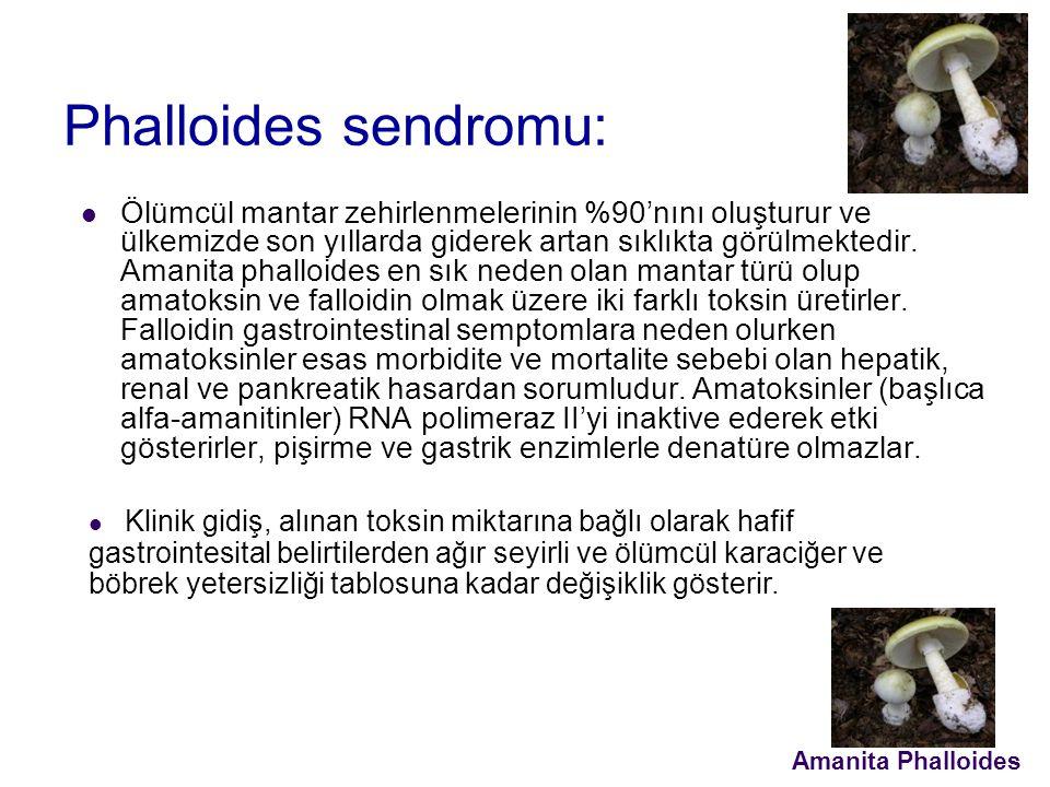 Phalloides sendromu: