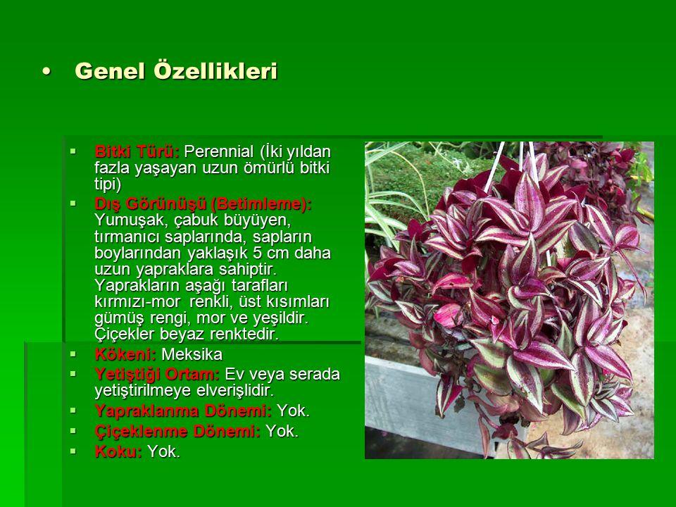 Genel Özellikleri Bitki Türü: Perennial (İki yıldan fazla yaşayan uzun ömürlü bitki tipi)