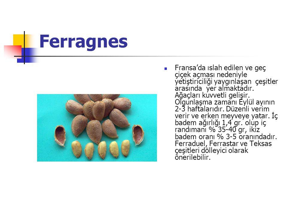 Ferragnes