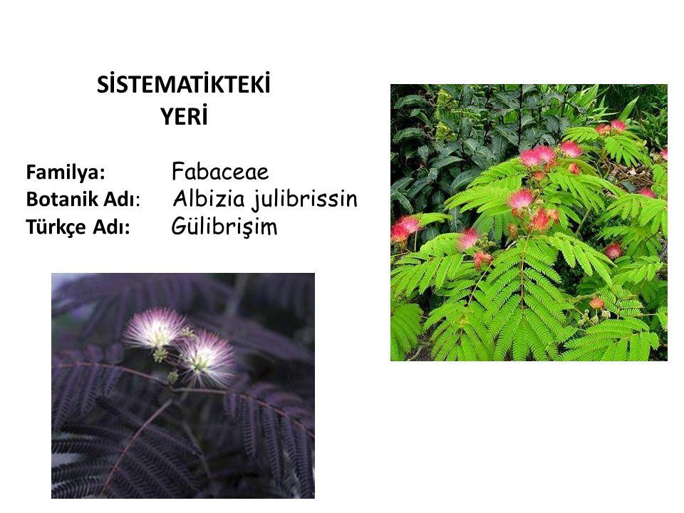SİSTEMATİKTEKİ YERİ Familya: Fabaceae Botanik Adı: Albizia julibrissin