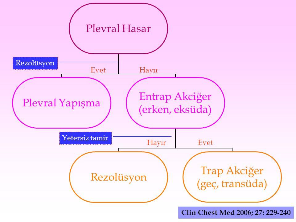 Clin Chest Med 2006; 27: 229-240