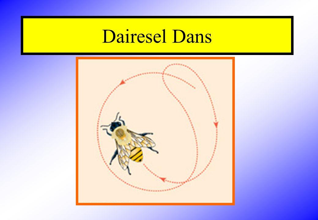 Dairesel Dans