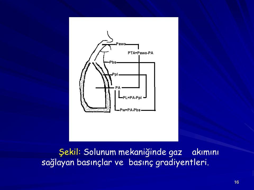Şekil: Solunum mekaniğinde gaz akımını sağlayan basınçlar ve basınç gradiyentleri.