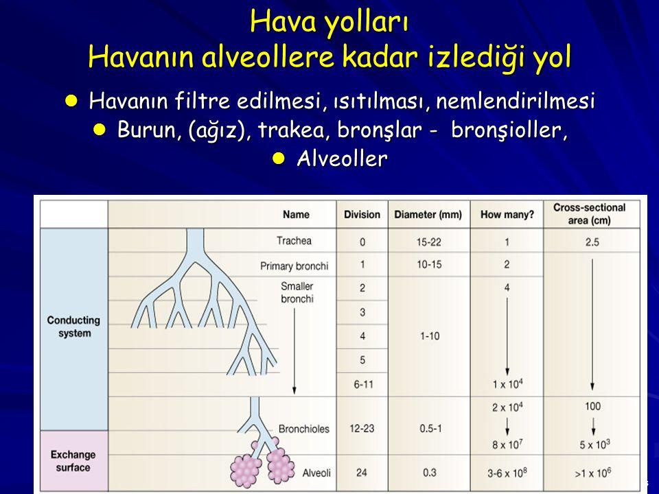 Hava yolları Havanın alveollere kadar izlediği yol