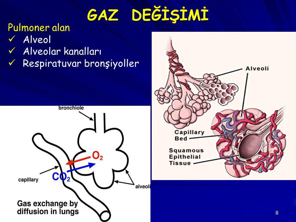 GAZ DEĞİŞİMİ Pulmoner alan Alveol Alveolar kanalları