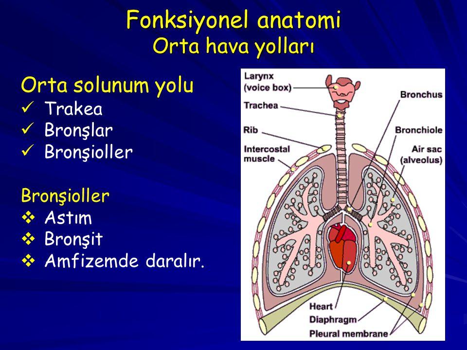 Fonksiyonel anatomi Orta hava yolları
