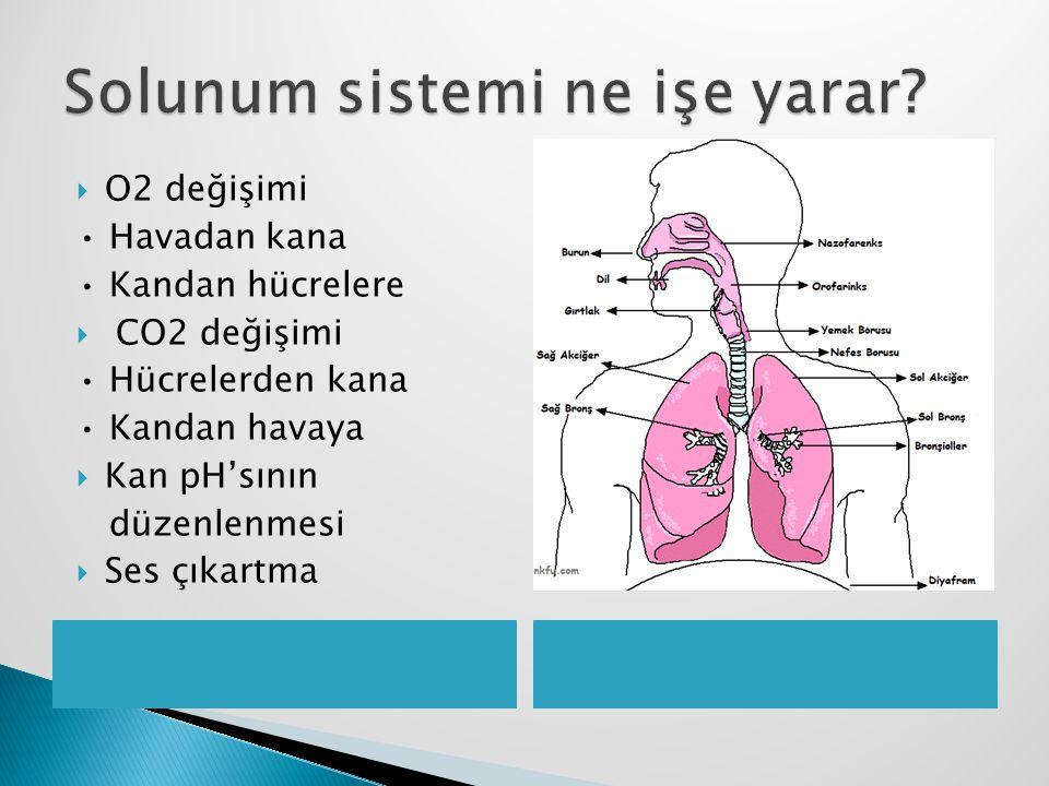 Solunum sistemi ne işe yarar