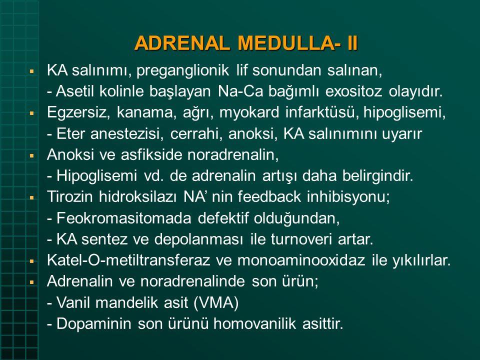 ADRENAL MEDULLA- II KA salınımı, preganglionik lif sonundan salınan,
