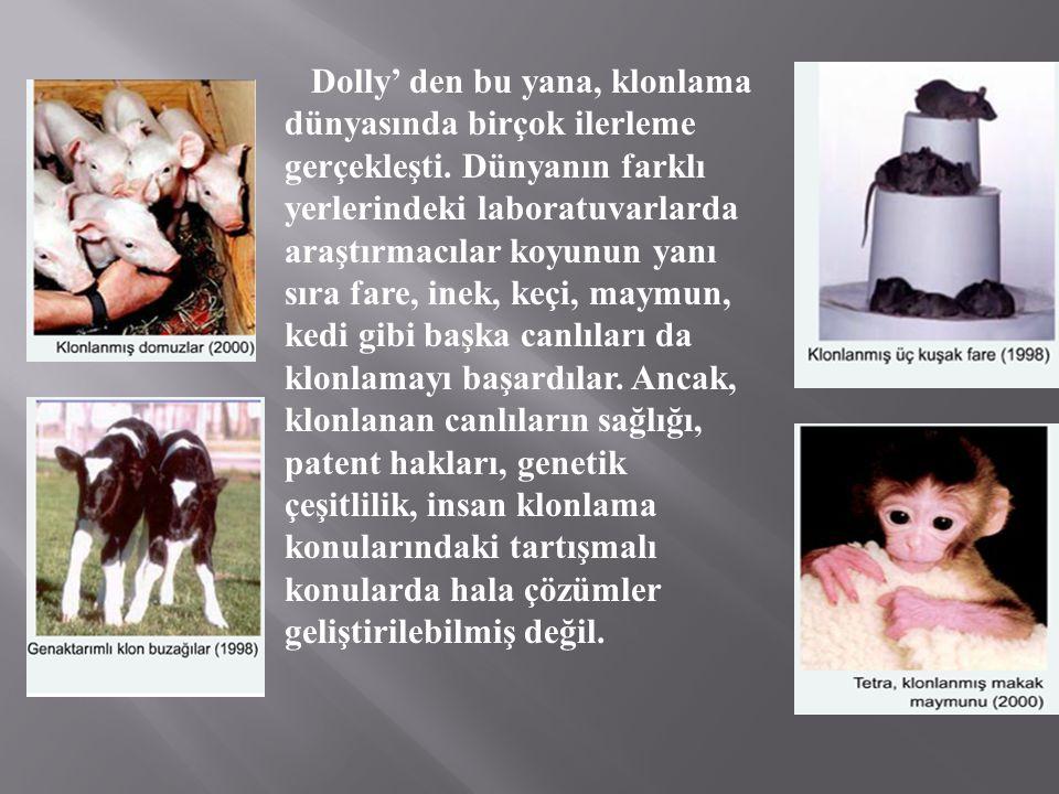 Dolly' den bu yana, klonlama dünyasında birçok ilerleme gerçekleşti