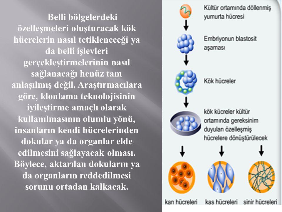 Belli bölgelerdeki özelleşmeleri oluşturacak kök hücrelerin nasıl tetikleneceği ya da belli işlevleri gerçekleştirmelerinin nasıl sağlanacağı henüz tam anlaşılmış değil.