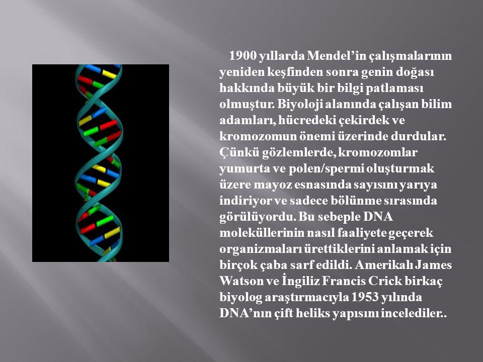1900 yıllarda Mendel'in çalışmalarının yeniden keşfinden sonra genin doğası hakkında büyük bir bilgi patlaması olmuştur.