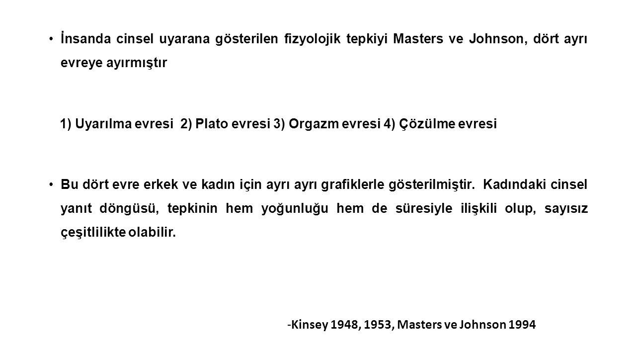 İnsanda cinsel uyarana gösterilen fizyolojik tepkiyi Masters ve Johnson, dört ayrı evreye ayırmıştır