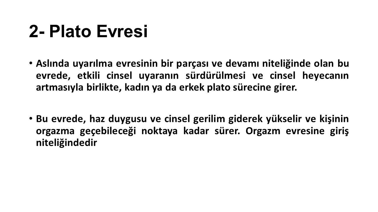 2- Plato Evresi