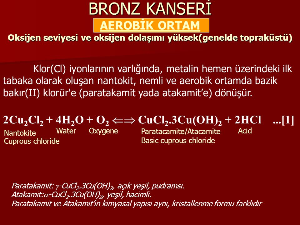 BRONZ KANSERİ AEROBİK ORTAM Oksijen seviyesi ve oksijen dolaşımı yüksek(genelde topraküstü)