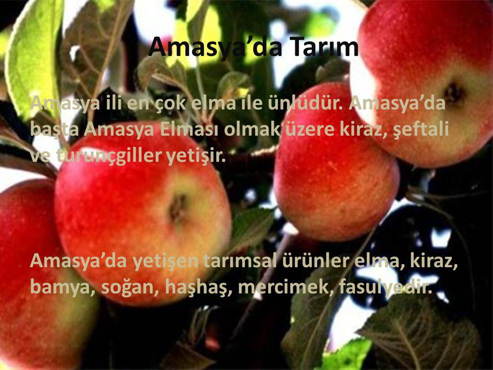 Amasya'da Tarım