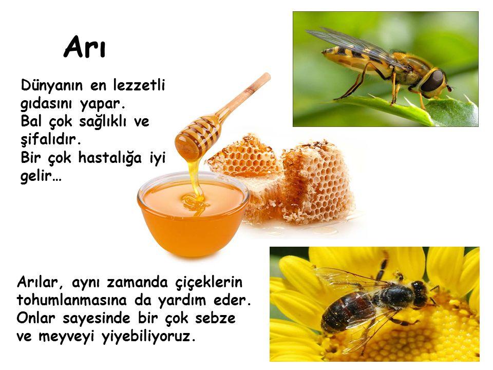 Arı Dünyanın en lezzetli gıdasını yapar.