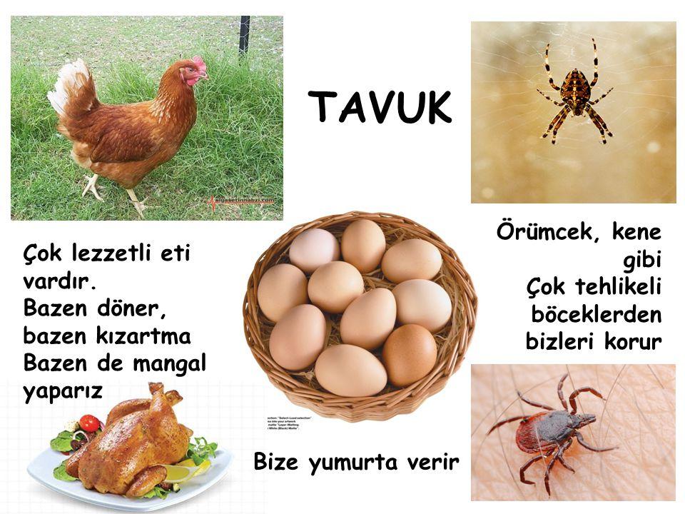 TAVUK Örümcek, kene gibi Çok lezzetli eti vardır.