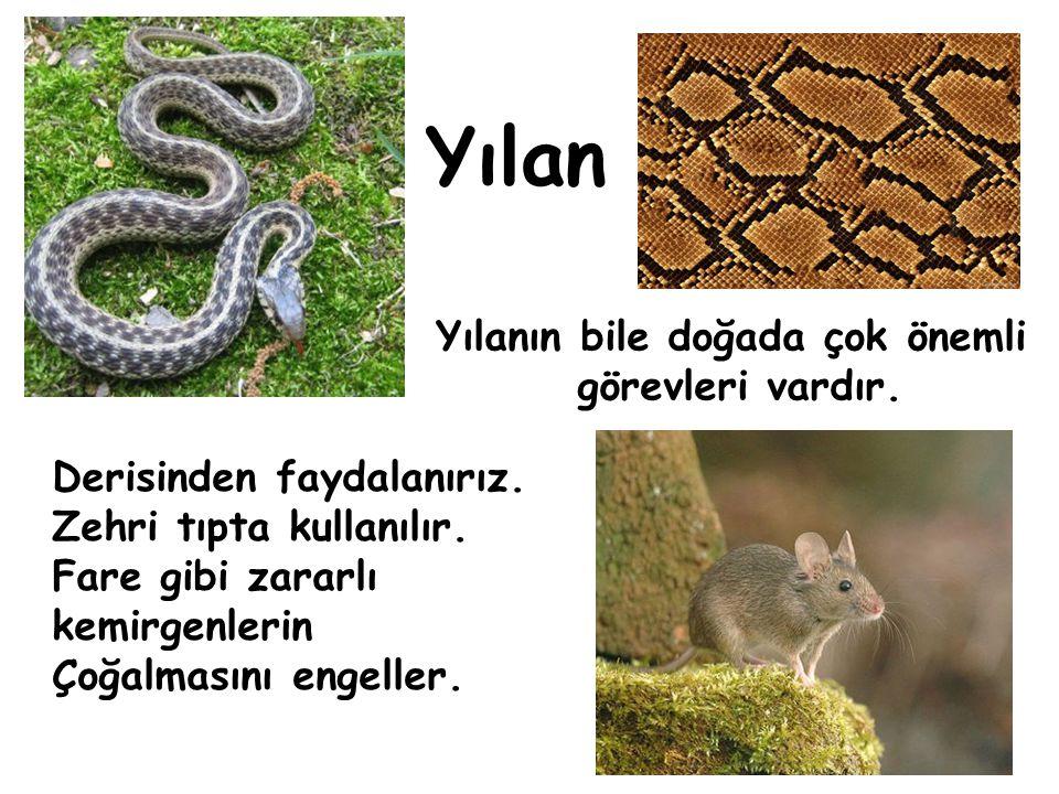 Yılanın bile doğada çok önemli