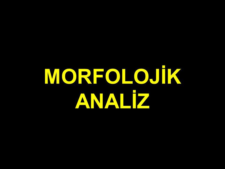 MORFOLOJİK ANALİZ