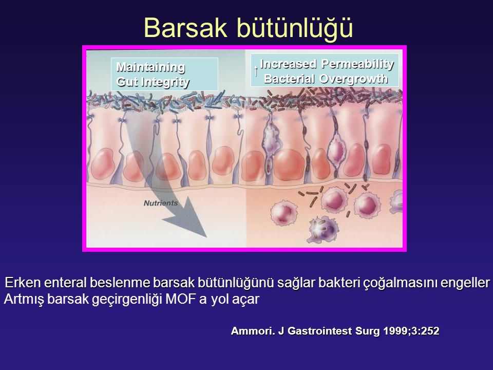 Barsak bütünlüğü  Increased Permeability. Bacterial Overgrowth. Maintaining. Gut Integrity.