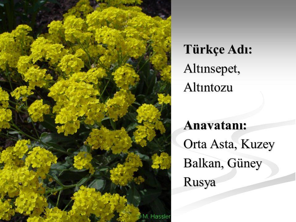Türkçe Adı: Altınsepet, Altıntozu Anavatanı: Orta Asta, Kuzey Balkan, Güney Rusya