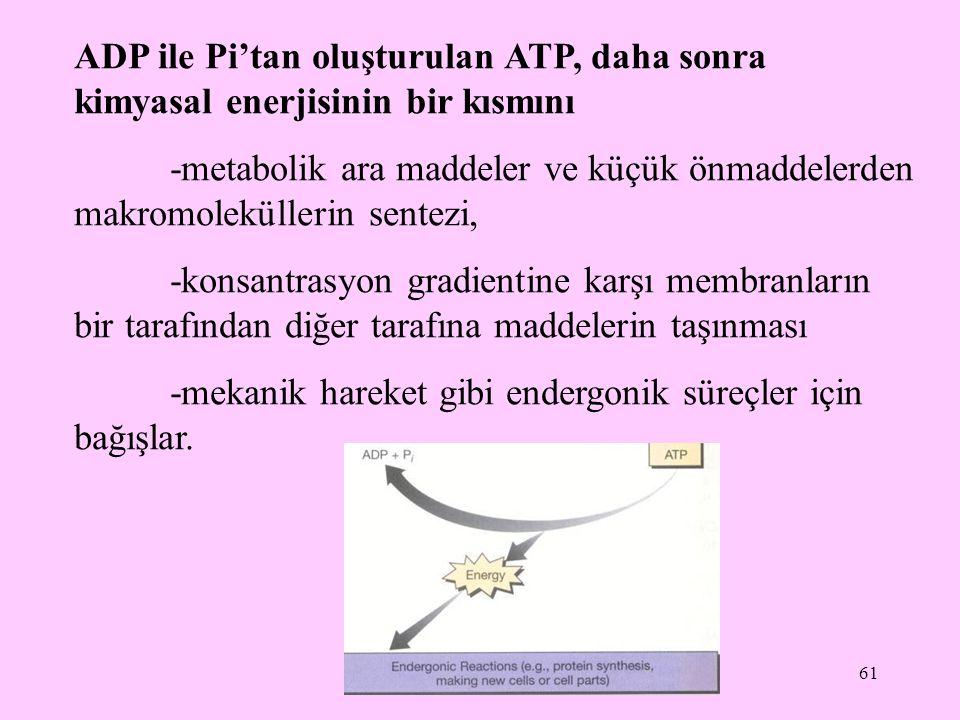 ADP ile Pi'tan oluşturulan ATP, daha sonra kimyasal enerjisinin bir kısmını