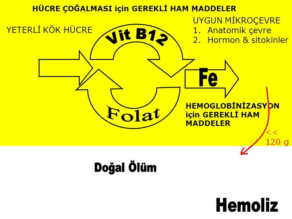 Vit B12 Fe Folat Doğal Ölüm Hemoliz UYGUN MİKROÇEVRE Anatomik çevre