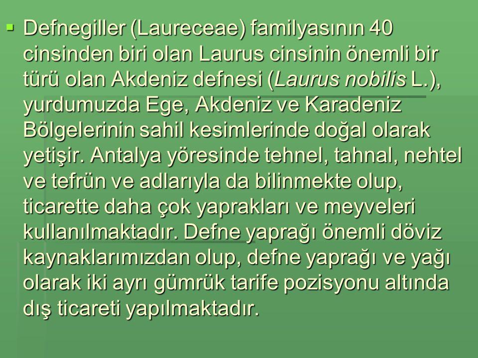 Defnegiller (Laureceae) familyasının 40 cinsinden biri olan Laurus cinsinin önemli bir türü olan Akdeniz defnesi (Laurus nobilis L.), yurdumuzda Ege, Akdeniz ve Karadeniz Bölgelerinin sahil kesimlerinde doğal olarak yetişir.