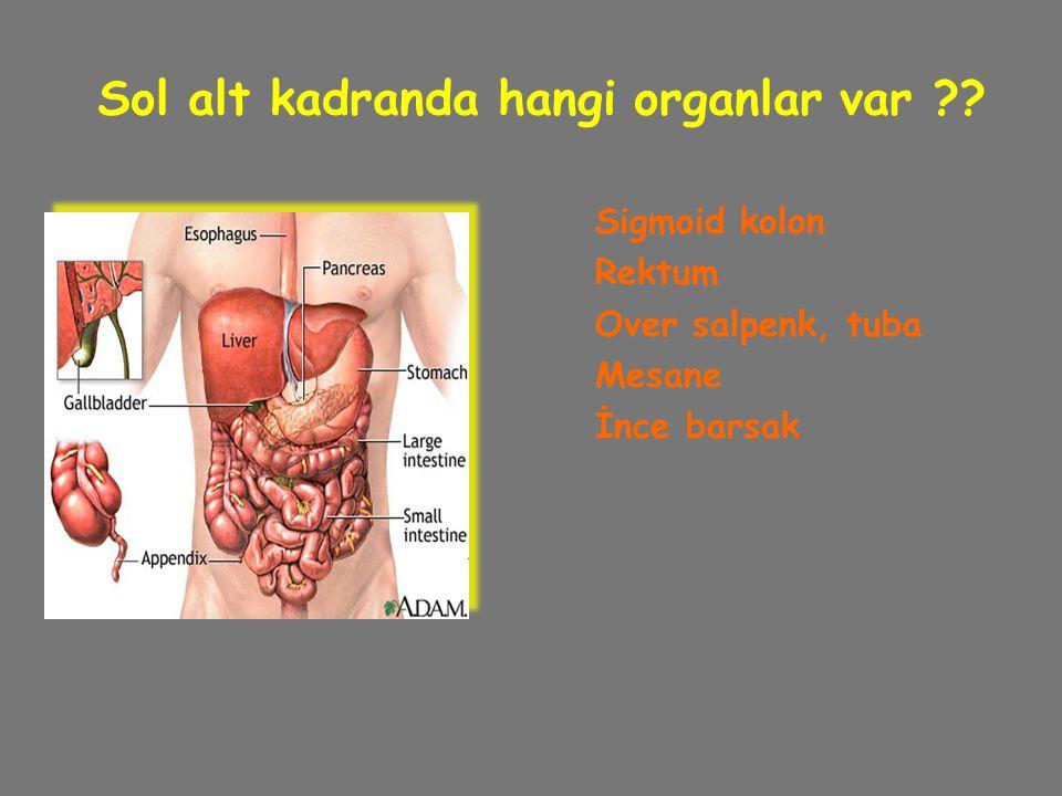 Sol alt kadranda hangi organlar var