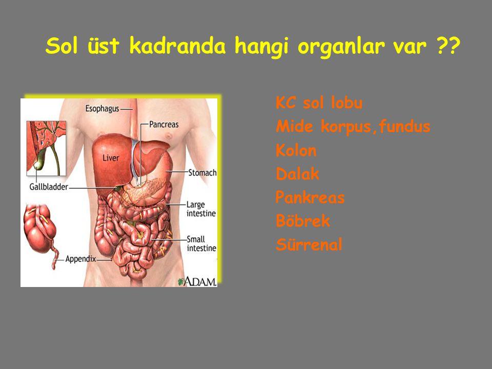 Sol üst kadranda hangi organlar var