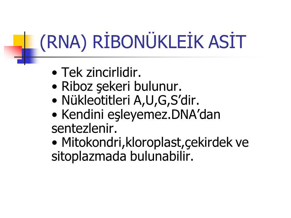 (RNA) RİBONÜKLEİK ASİT