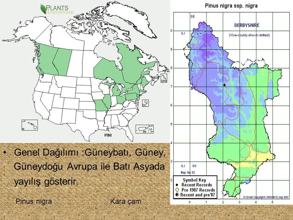Genel Dağılımı :Güneybatı, Güney,