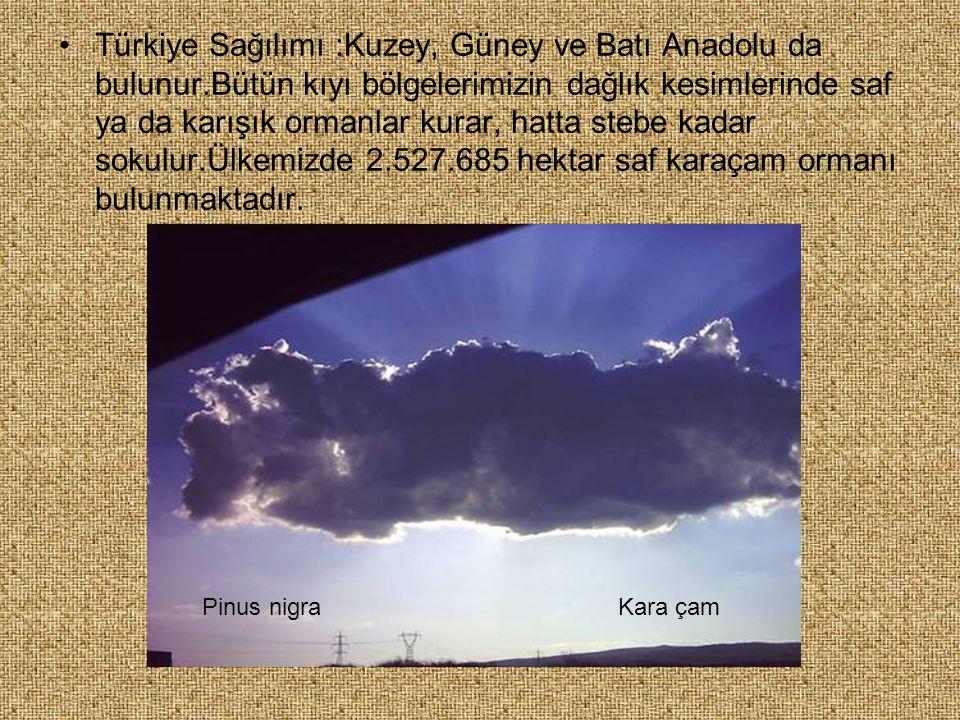 Türkiye Sağılımı :Kuzey, Güney ve Batı Anadolu da bulunur