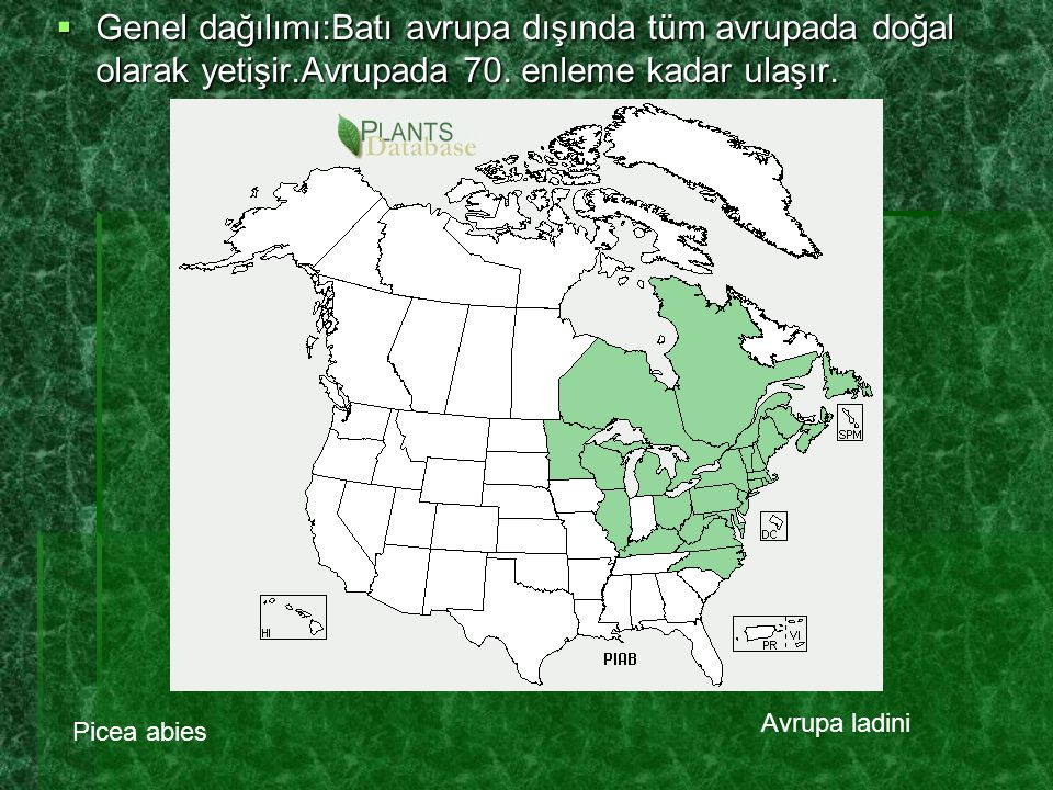 Genel dağılımı:Batı avrupa dışında tüm avrupada doğal olarak yetişir