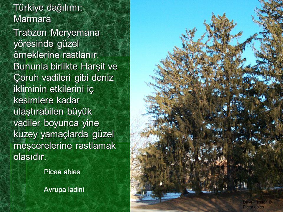 Türkiye dağılımı: Marmara