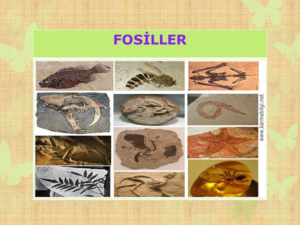 FOSİLLER