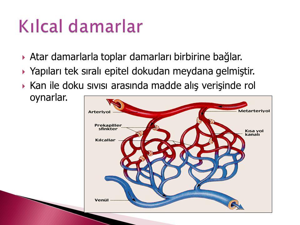 Kılcal damarlar Atar damarlarla toplar damarları birbirine bağlar.