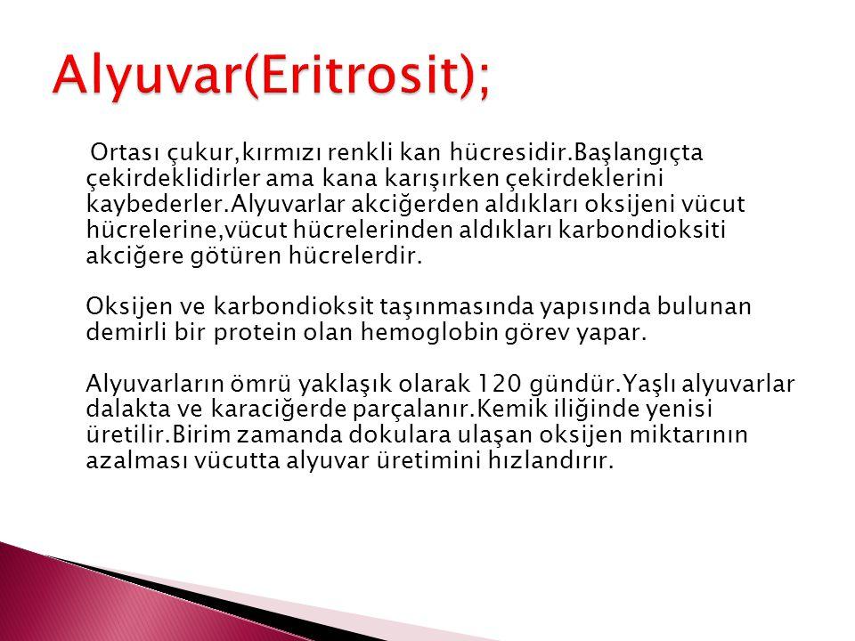 Alyuvar(Eritrosit);