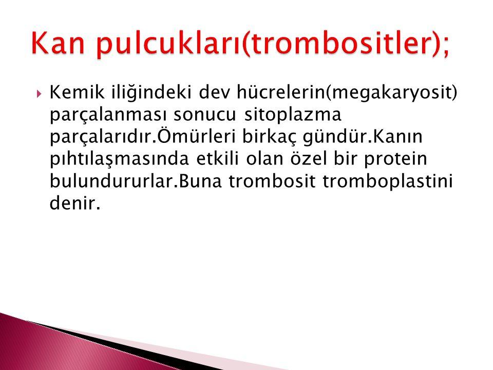 Kan pulcukları(trombositler);
