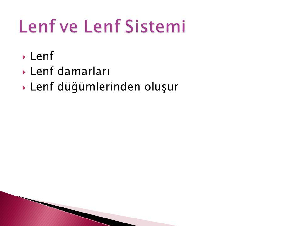 Lenf ve Lenf Sistemi Lenf Lenf damarları Lenf düğümlerinden oluşur
