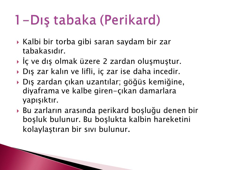 1-Dış tabaka (Perikard)