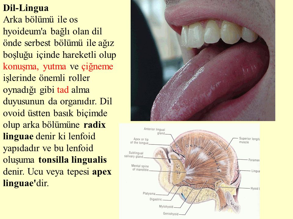 Dil-Lingua