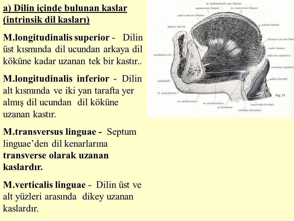 a) Dilin içinde bulunan kaslar (intrinsik dil kasları)